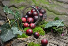 Fresh cranberries fruits juice bio organic. Juice health stock images