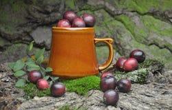 Fresh cranberries fruits juice bio organic. Juice health royalty free stock images