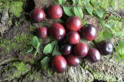 Fresh cranberries fruits juice bio organic. Juice health stock photography
