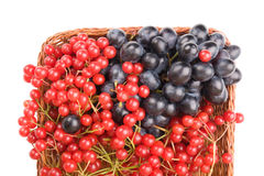 Fresh cranberries and grapes in basket isolated on white backgro Royalty Free Stock Image