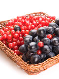 Fresh cranberries and grapes in basket isolated on white backgro Stock Photos