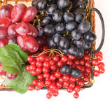 Fresh cranberries and grapes in basket Stock Images