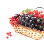 Fresh cranberries and grapes in basket Stock Photography