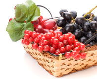 Fresh cranberries and grapes in basket Stock Photos