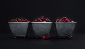 Fresh Cranberries Heaped in Three Footed Metal Containers against Black. Fresh red and maroon cranberries heaped into three tin footed containers with loose Stock Photos