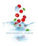 Fresh cranberries and ice cubes falling to water Stock Photos