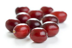 Fresh cranberries isolated Royalty Free Stock Photos