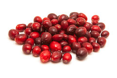 Fresh cranberries Stock Image