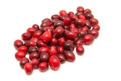 Fresh cranberries Stock Images