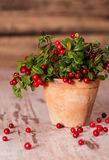 Fresh cranberries in a pot. Fresh tasty cranberries in a pot stock image