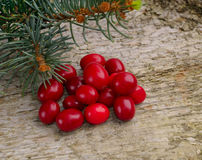 Fresh cranberries Stock Photos