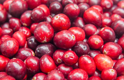 Fresh cranberries Super food fruits Background Royalty Free Stock Images