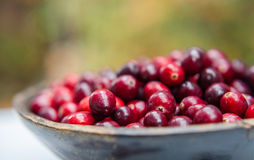 Fresh cranberries in wooden bowl Stock Photos