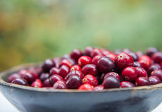 Fresh cranberries in wooden bowl Royalty Free Stock Images