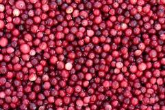 Fresh Cranberry. Stock Photos