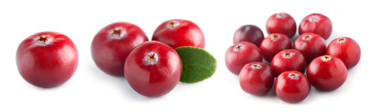 Fresh cranberry Royalty Free Stock Photos