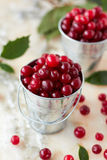 Fresh cranberry Royalty Free Stock Photography
