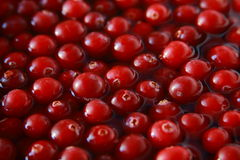 Fresh cranberry in water Stock Photos