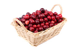 Fresh cranberry in the wicker basket isolated. Fresh cranberry in the wicker basket made in studio isolated on white background Royalty Free Stock Photography