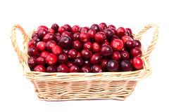Fresh cranberry in the wicker basket isolated Stock Images