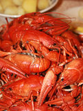 Fresh crawfish Royalty Free Stock Photo