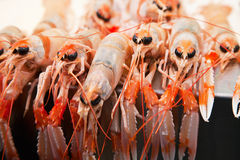 Fresh crawfish in a market Royalty Free Stock Images