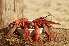 Fresh crayfish Stock Images