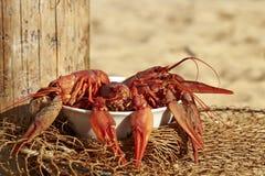 Fresh crayfish. Fresh boiled crayfish on the beach stock images