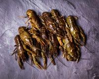 Fresh crayfish close-up. Group of fresh crayfish  on the slate dark background Stock Image