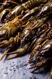 Fresh crayfish close-up. Group of fresh crayfish  on the slate dark background Stock Photos