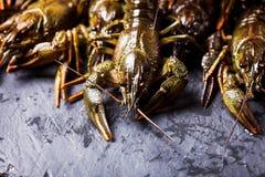 Fresh crayfish close-up. Group of fresh crayfish  on the slate dark background Royalty Free Stock Photo
