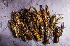 Fresh crayfish close-up. Group of fresh crayfish  on the slate dark background Stock Images