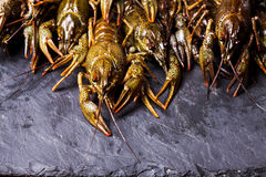 Fresh crayfish close-up. Group of fresh crayfish  on the slate dark background Royalty Free Stock Image