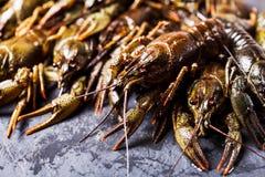 Fresh crayfish close-up. Group of fresh crayfish  on the slate dark background Stock Photography
