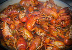 Fresh crayfish are cooked in a pot with boiling water Stock Photos