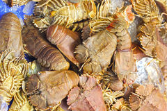 Fresh crayfish in the market. Stock Photo