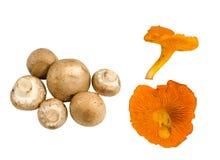 Fresh Cremini and Chanterelle Mushrooms Stock Image