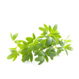 Fresh cress Royalty Free Stock Photography