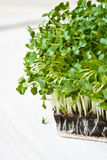 Fresh cress Royalty Free Stock Images