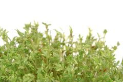 Fresh cress, Royalty Free Stock Photo
