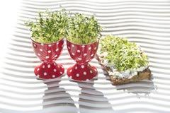 Fresh cress. In egg cup and whole corn bread (lepidium sativum Royalty Free Stock Photo