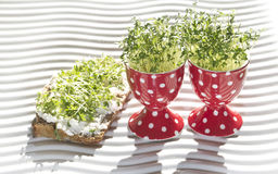 Fresh cress. In egg cup and whole corn bread (lepidium sativum Royalty Free Stock Image
