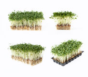 Fresh cress salad. 4 different views royalty free stock images