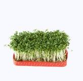 Fresh cress salad Stock Photo