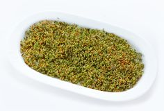 Fresh cress salad sprouts on white background. Fresh green cress salad sprouts isolated on white background Stock Photos