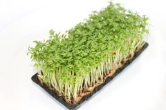 Fresh cress. Some fresh green cress in a box Royalty Free Stock Image