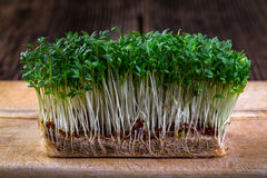 Fresh cress sprouting ready for salad. Healthy vegetarian food.Fresh herbs Royalty Free Stock Images