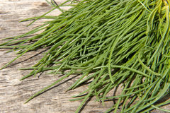 A Fresh cress Royalty Free Stock Images