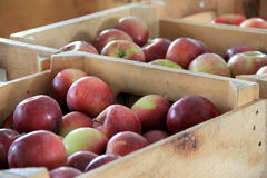 Fresh crisp apples in wood crates at local market Royalty Free Stock Photos