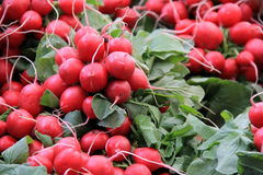 Fresh crisp radishes and greens Stock Photos